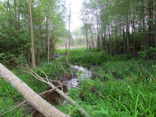 38+/- Acres Of Prime Wildlife : Wapwallopen : Luzerne County : Pennsylvania