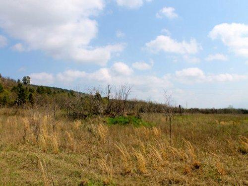 4.85 Acre Daisy Meadows, Electric : Daisy : Pittsburg County : Oklahoma