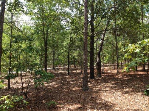 4 +/- Acres Off Stokes Bridge Road : Bishopville : Lee County : South Carolina