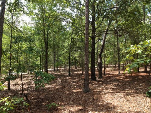 7.2 Acres Off Stokes Bridge Road W. : Bishopville : Lee County : South Carolina