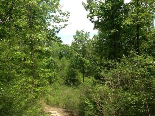 Mostly Hardwood Tract-38.78 Acres : Sandy Hook : Walthall County : Mississippi