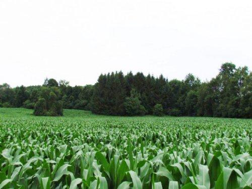Farmland Near Syracuse 14 Acres : Pompey : Onondaga County : New York