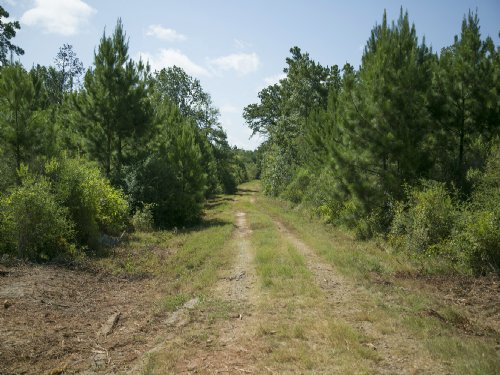 166 Acres Lovelady : Lovelady : Houston County : Texas