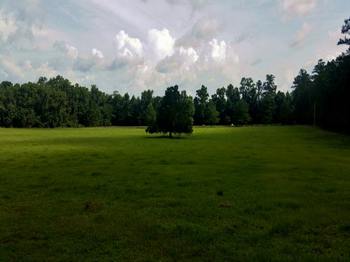 229± Acre Reddick Ranch : Reddick : Marion County : Florida