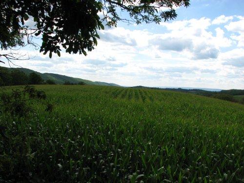 21.84+/- Acres - Woods & Farmland : Rebuck : Northumberland County : Pennsylvania
