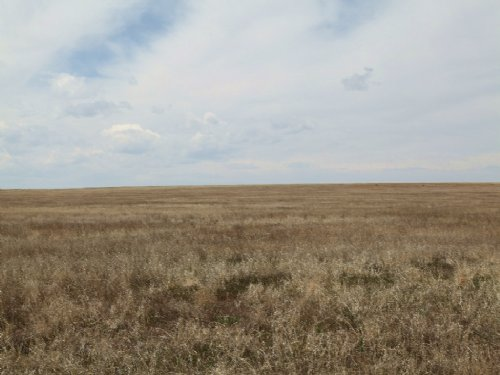 Expiring Crp & Pasture Land : Fort Morgan : Adams County : Colorado