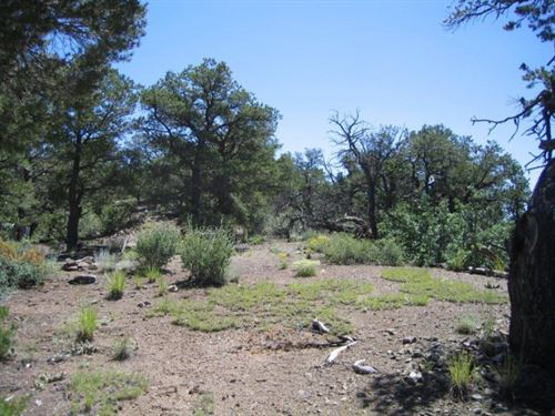 233374, Heavily Treed Lot With Se : Howard : Fremont County : Colorado
