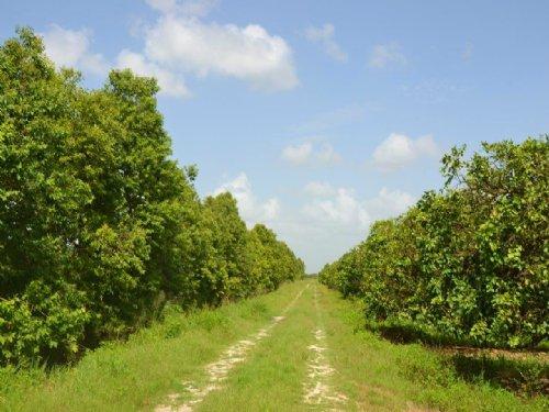 Vero West Grove : Vero Beach : Indian River County : Florida