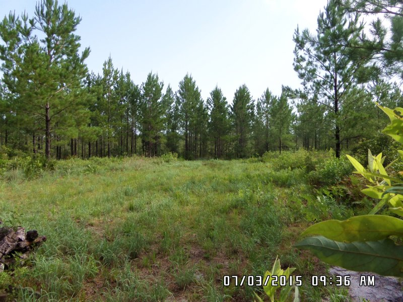 Hunting, Timber, Camping 103 Acres : Waycross : Ware County : Georgia