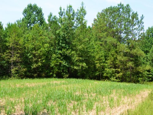 322 Pike Hunting & Timber Tract : Troy : Pike County : Alabama