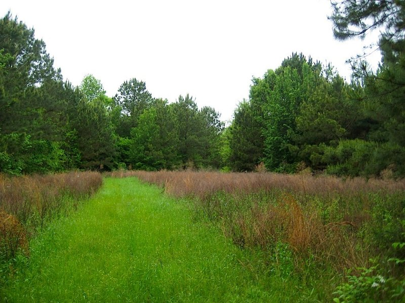 Montgomery Hunting & Fishing Tract : Pike Road : Montgomery County : Alabama