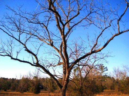 28.62 Ac Home Sites & Horse Farm : Eclectic : Elmore County : Alabama