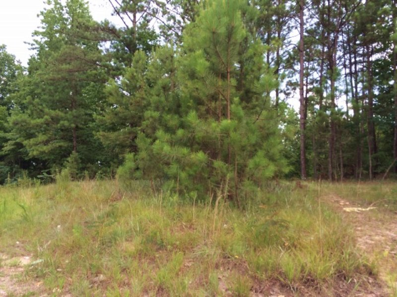 Bank Owned 9 Wooded Acres : Odenville : Saint Clair County : Alabama