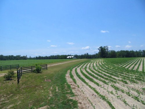 151 Acres With Home, Open, Wooded : Midville : Burke County : Georgia