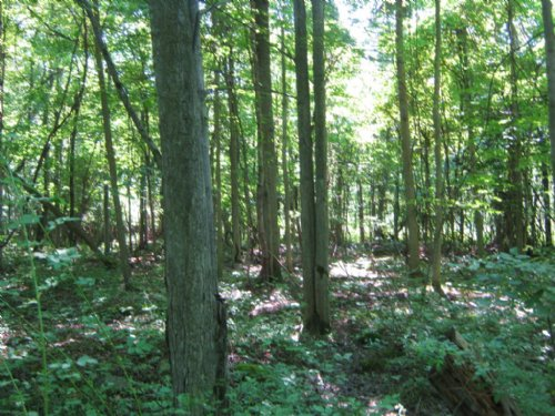 Land Woods And Pond 24 Acres : Sodus : Wayne County : New York