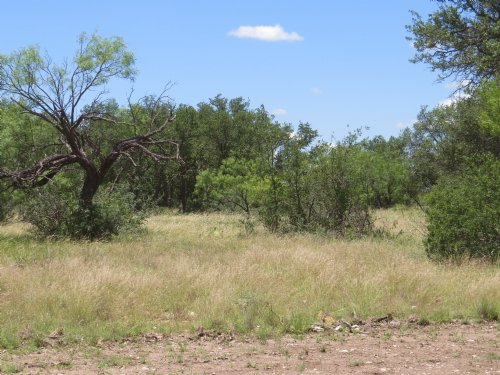 Recreational Hunting Property : Eden : Concho County : Texas