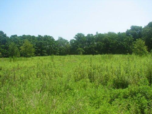Little Fields Farm : Nevils : Bulloch County : Georgia