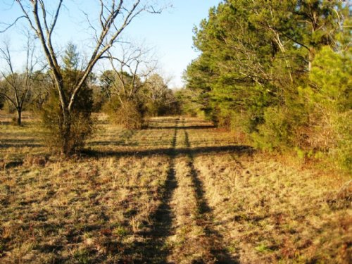 11 +/- Acre Lot : Eclectic : Elmore County : Alabama