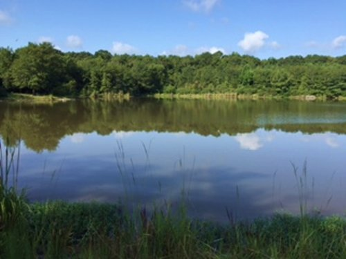 57 +/- Acres And A Pond : Jack : Coffee County : Alabama