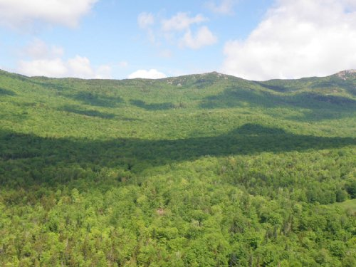 Burnt Mountain Forest : Middlesex : Washington County : Vermont