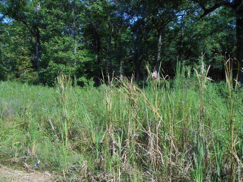 3 Lots On Pecan Dr. Near Marksville : Marksville : Avoyelles Parish : Louisiana
