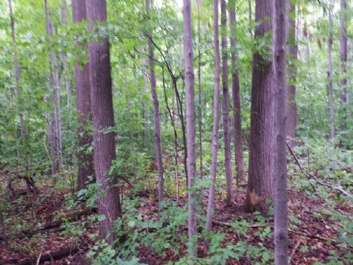Building Lot Near Ithaca Woodland : Ulysses : Tompkins County : New York