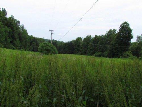 Country Acreage - 18 Ac - Pompey : Pompey : Onondaga County : New York