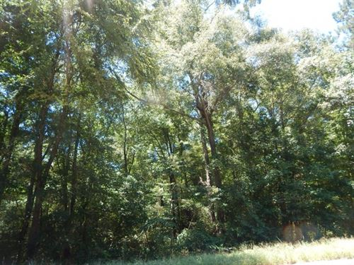 Mature Hardwoods, 97.99 Acres : Tylertown : Walthall County : Mississippi