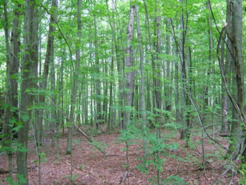 Wooded Land Hunting 63 Acres : Grove : Allegany County : New York