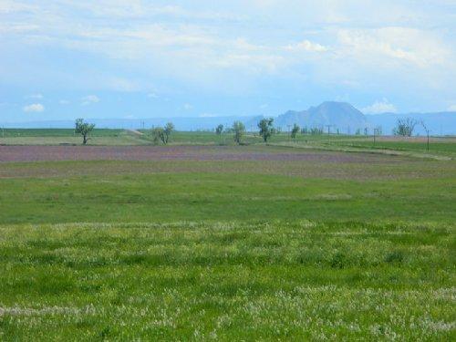 Rogers Irrigated Farm : Newell : Butte County : South Dakota