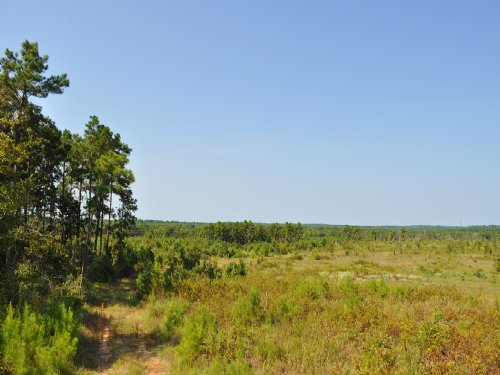 122 Acres Ryan's Ferry Road : Pointblank : San Jacinto County : Texas