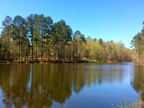 White Pine Plantation : Greensboro : Greene County : Georgia