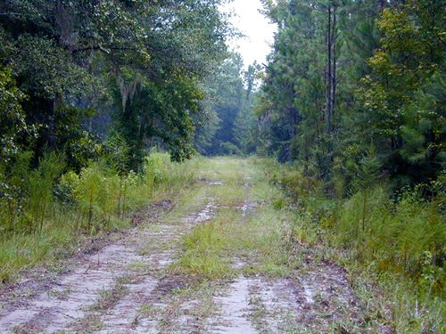 St Marks River Ranch : St. Marks : Wakulla County : Florida