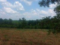 21+/- Acre Mini-farm Lee Rd. 71 : Auburn : Lee County : Alabama