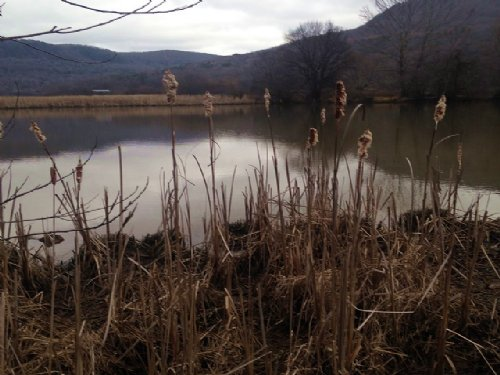 9.91+/- Acres Lake Front Property : Whitwell : Marion County : Tennessee