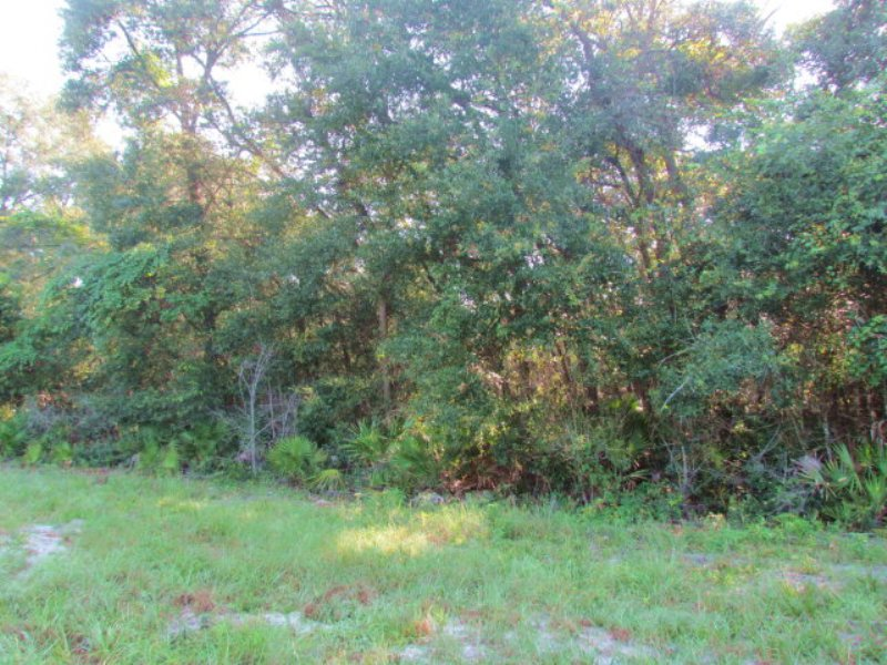 5 Ac On Paved Road 770626 : Old Town : Dixie County : Florida