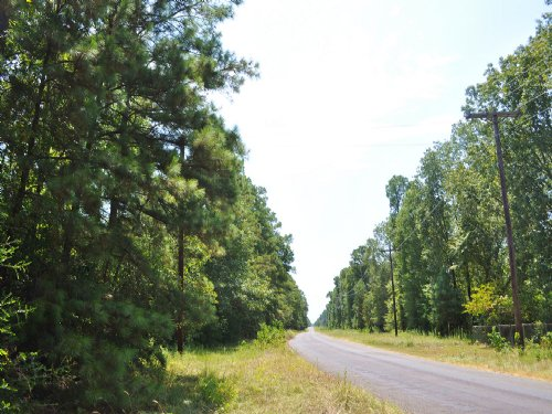203 Acres Mangum Road : Livingston : Polk County : Texas