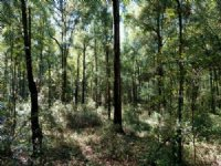 Glenns Branch : Statesboro : Bulloch County : Georgia