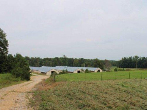 Four House Broiler And Cattle Farm : Hamilton : Marion County : Alabama