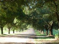 Hoover Plantation : Tillman : Jasper County : South Carolina