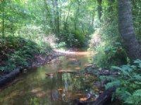 134 Acres : Honea Path : Abbeville County : South Carolina