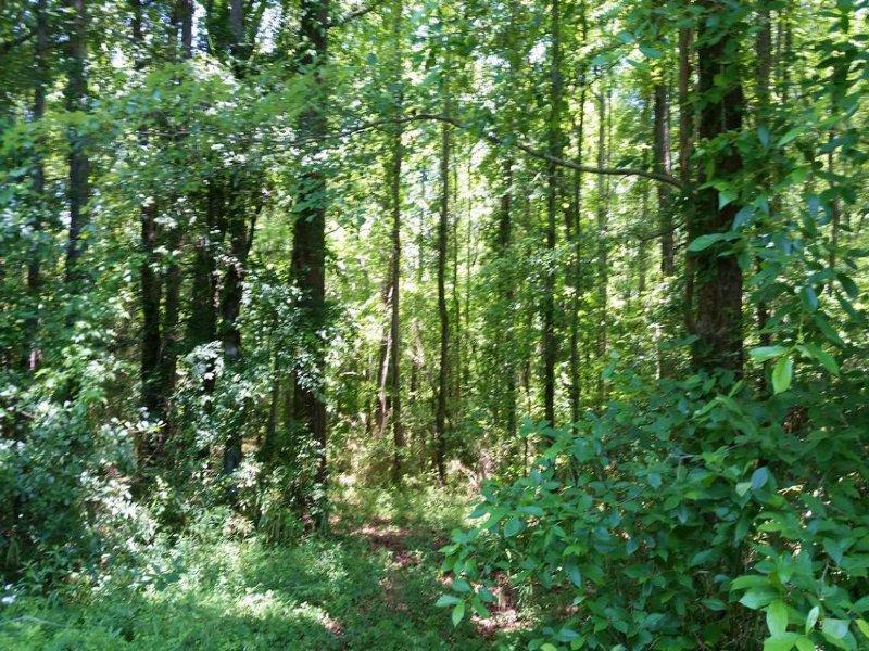 116 Acres Timberland Franklin, Ga : Franklin : Heard County : Georgia