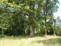 116+ Acres Undeveloped Land : Oxford : Newton County : Georgia