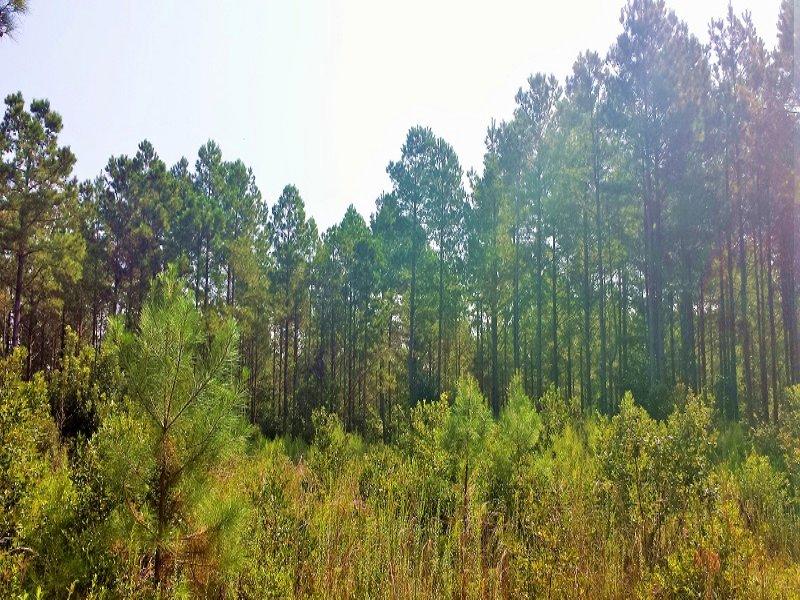 Rural Timber Investment : Burgaw : Pender County : North Carolina