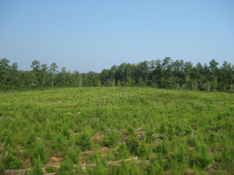 Winnsboro Timber & Recreation Land : Winnsboro : Fairfield County : South Carolina