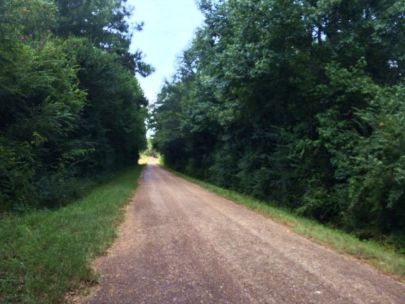 15.50 Acres Timber Land : Magnolia : Pike County : Mississippi