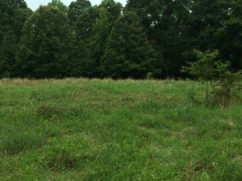 187.50 Acres Hunting Land, Timber : Yazoo City : Yazoo County : Mississippi