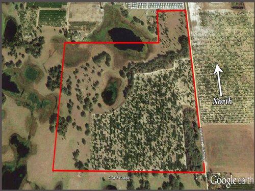 127 Acre Citrus & Pasture : Haines City : Polk County : Florida