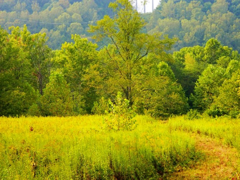 Hansley Rd - 142 Acres : Sugar Grove : Fairfield County : Ohio