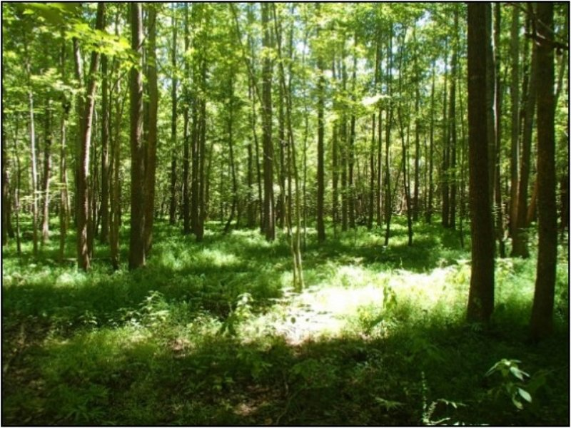 120.00 Acres Agriculture Land : French Camp : Choctaw County : Mississippi